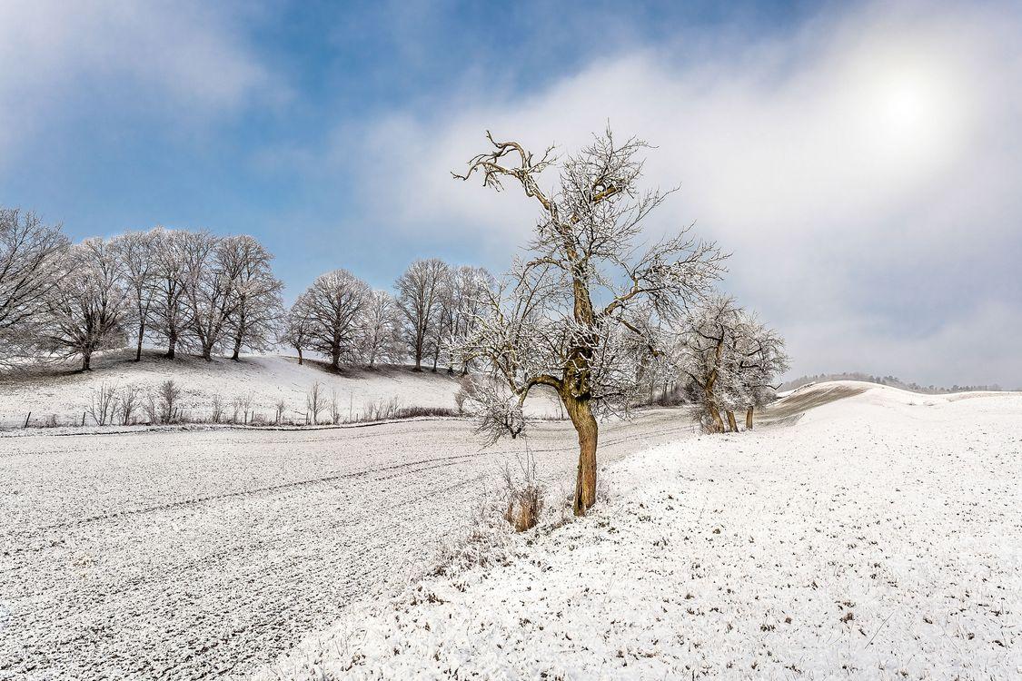 Фото бесплатно поле, пашня, деревья - на рабочий стол