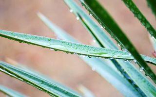 Бесплатные фото растение,стебли,капли,вода,роса
