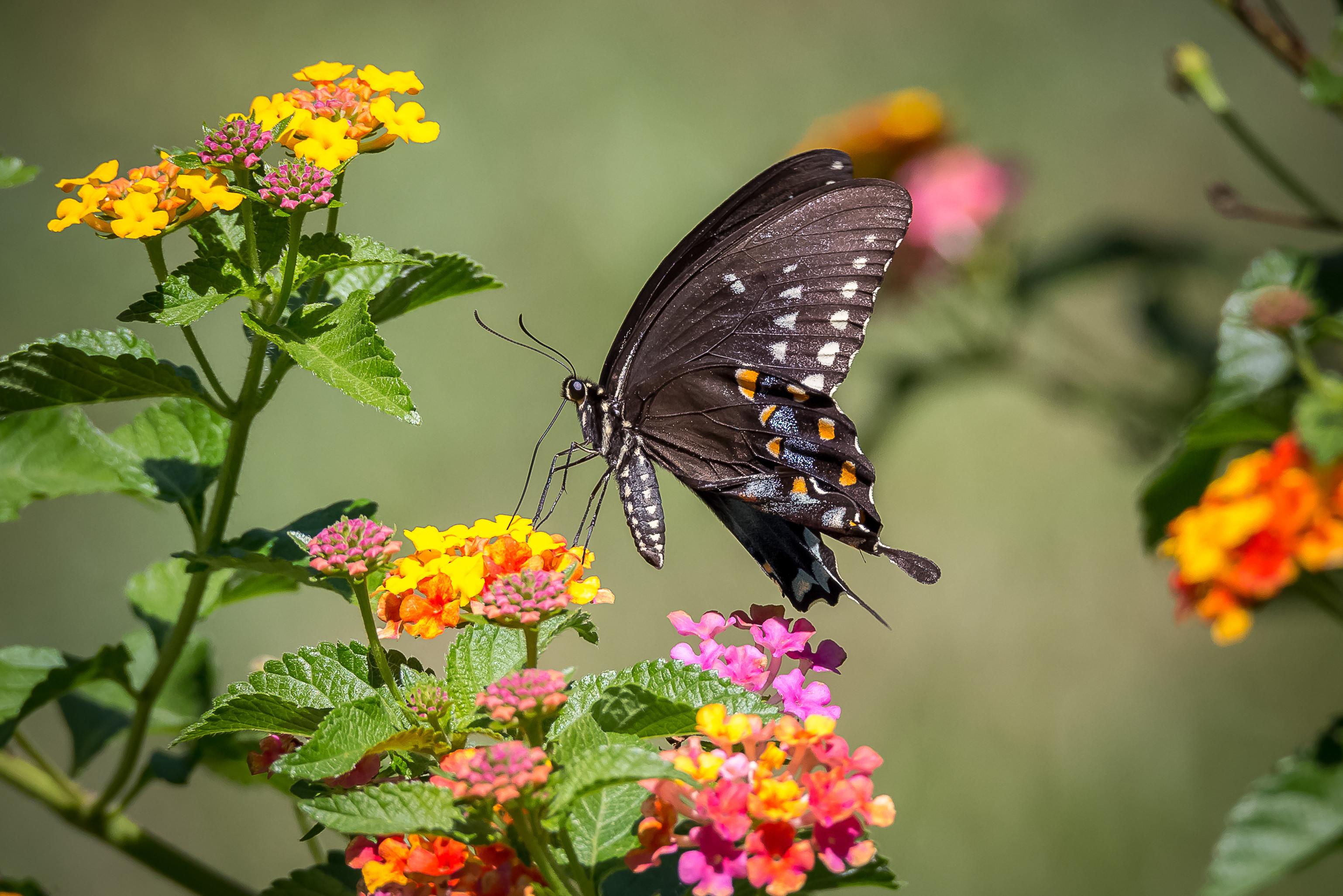 https://img.fonwall.ru/o/05/babochka-cvetok-cvety-flora-47kt.jpg