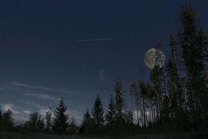 Бесплатные фото ночь, дерево, деревья, лес, луна, небо, звёзды