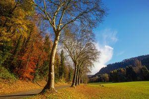 Бесплатные фото осень,поле,дорога,лес,деревья,пейзаж