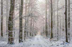 Заставки зима, лес, деревья, дорога, пейзаж