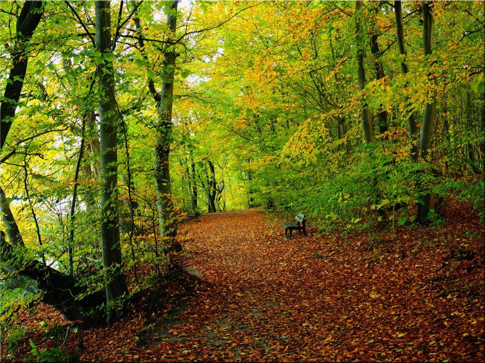 Обои осень, лес, лавочка, деревья, дорога, пейзаж на телефон   картинки пейзажи - скачать