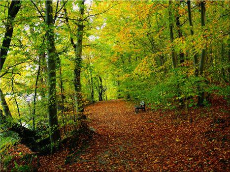 Фото бесплатно осень, лес, лавочка, деревья, дорога, пейзаж
