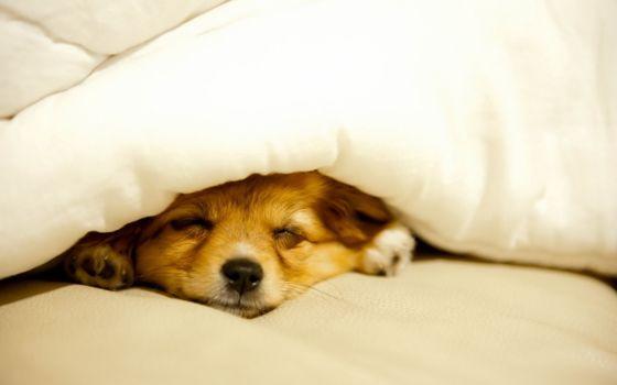 Photo free bed, blanket, dog