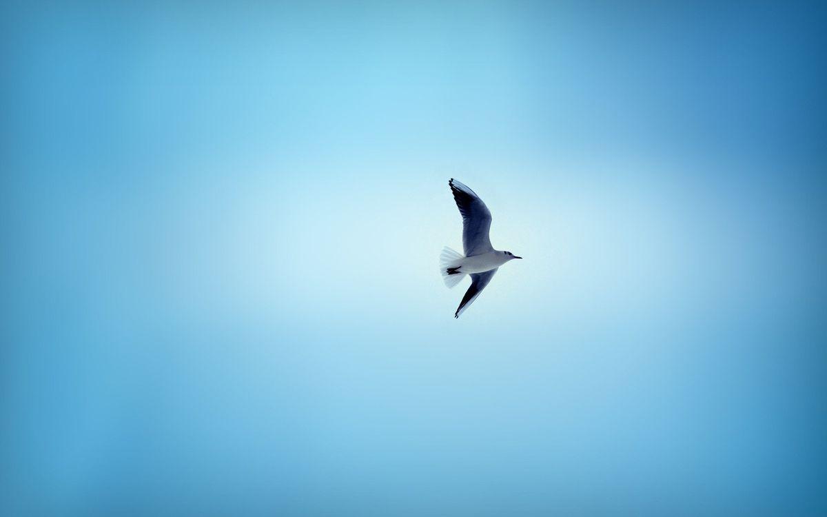 Фото бесплатно крылья, клюв, хвост - на рабочий стол