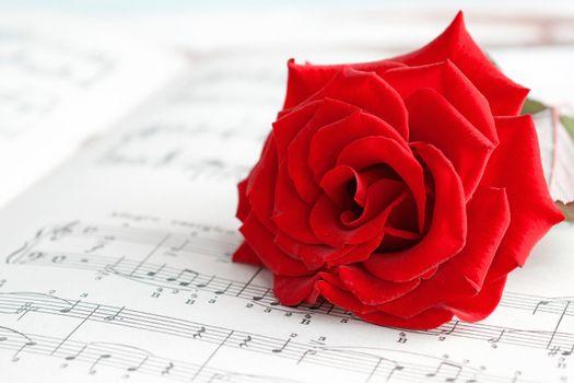 Фото бесплатно красные лепестки, флора, красные бутоны