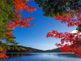 Бесплатные фото осень,озеро,деревья,пейзаж