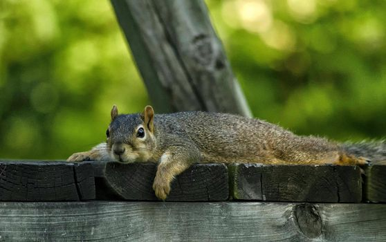 Photo free squirrel, animal, look