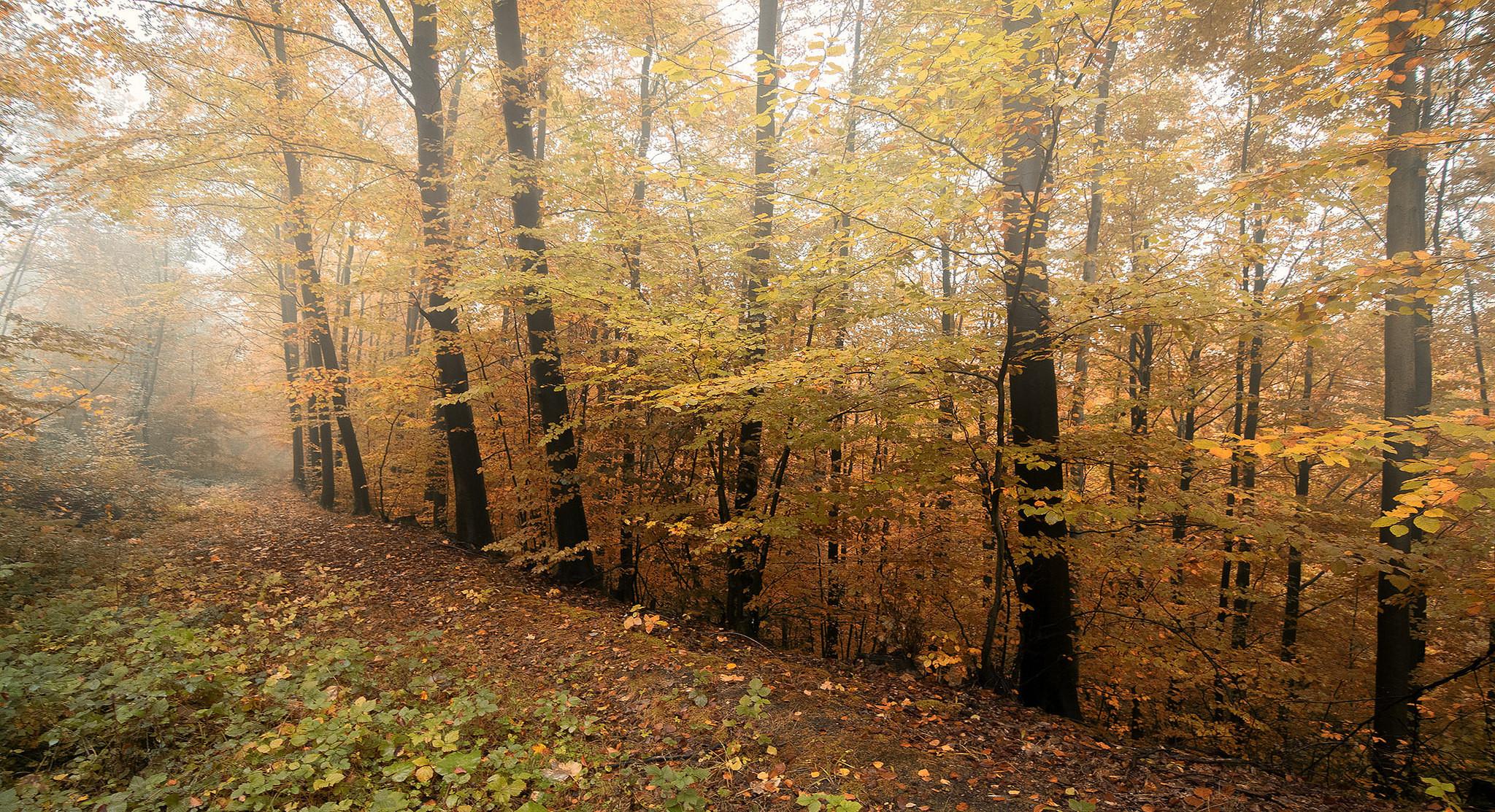 обои осень, лес, деревья, пейзаж картинки фото