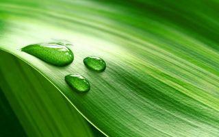 Бесплатные фото лист,зеленый,прожилки,капли,вода