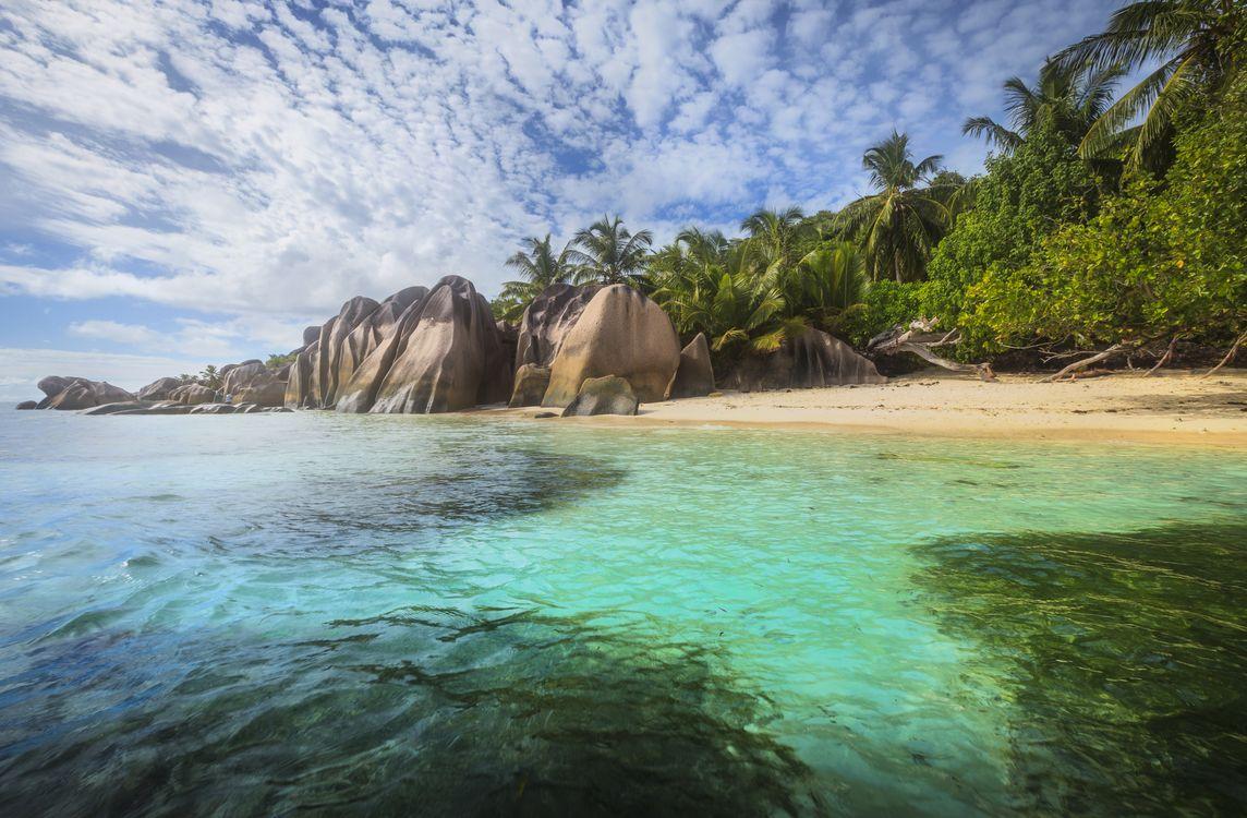 Фото бесплатно море, океан, волны, Пальмы, деревья, пляж, Seychelles, пейзажи