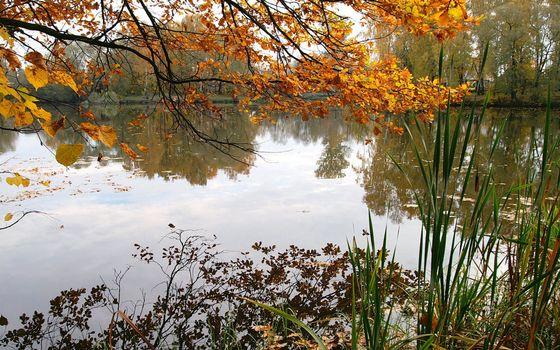 Бесплатные фото осень,озеро,камыш,деревья,ветви,листва