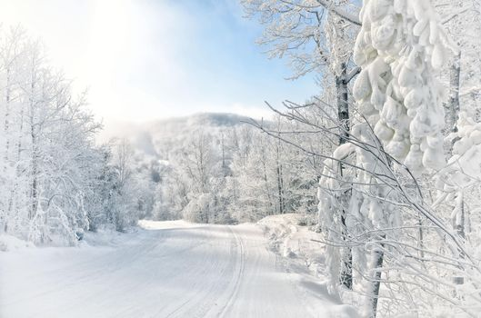 Photo free landscapes, forest, winter road