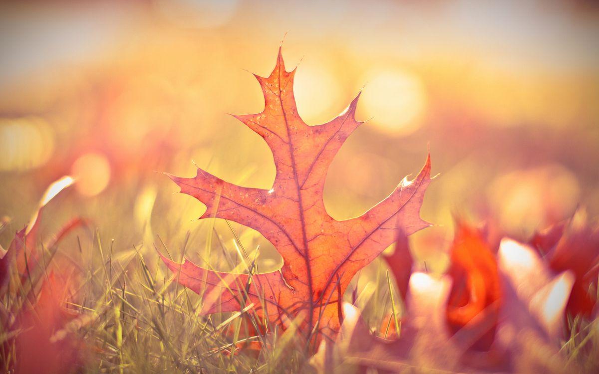 Фото бесплатно трава, листья, оранжевые, прожилки, макро