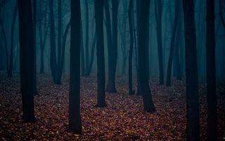 Бесплатные фото осень,лес,деревья,стволы,листва,туман