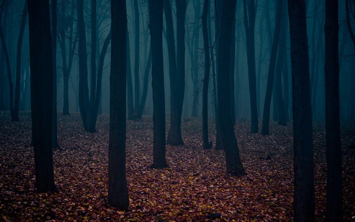 Фото бесплатно осень, лес, деревья, стволы, листва, туман - на рабочий стол