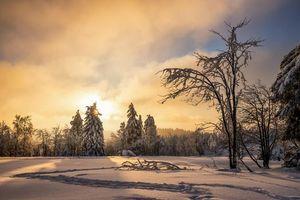 Бесплатные фото закат,зима,деревья,сугробы,следы,пейзаж