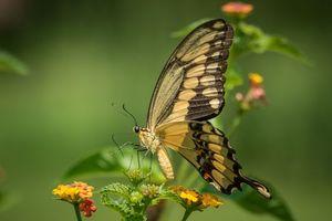 Заставки бабочка, цветок, цветы, флора, макро