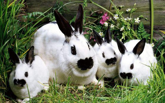 Фото бесплатно кролики, морды, уши