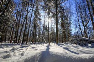 Фото бесплатно зима, лес, деревья, сугробы, пейзаж