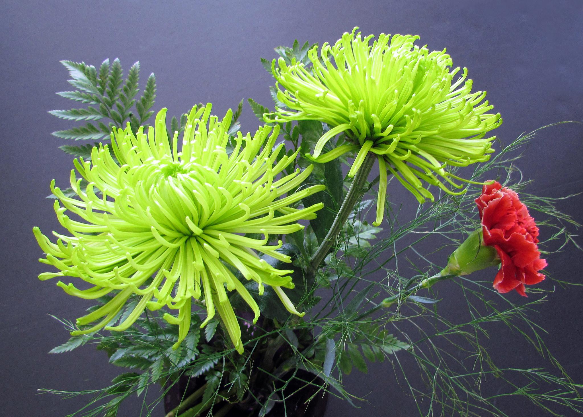 обои Георгины, цветы, букет, флора картинки фото