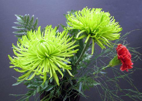 Георгины, цветы, букет, флора