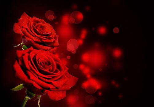 Фото бесплатно роза, красный букет, красные розы