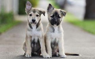 Photo free puppies, muzzles, paws