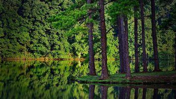 Бесплатные фото лето,лес,деревья,река,отражение