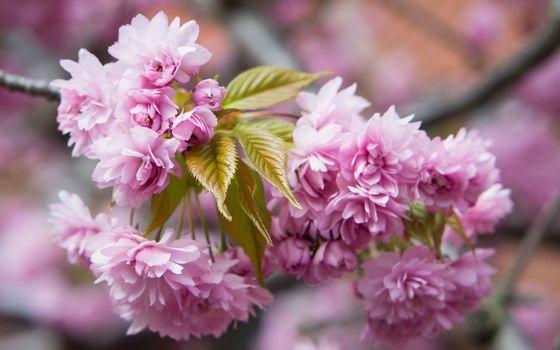 Бесплатные фото Розовые цветы,дерево,аромат,лес