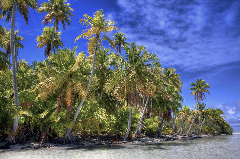 природа море облака деревья пляж без смс