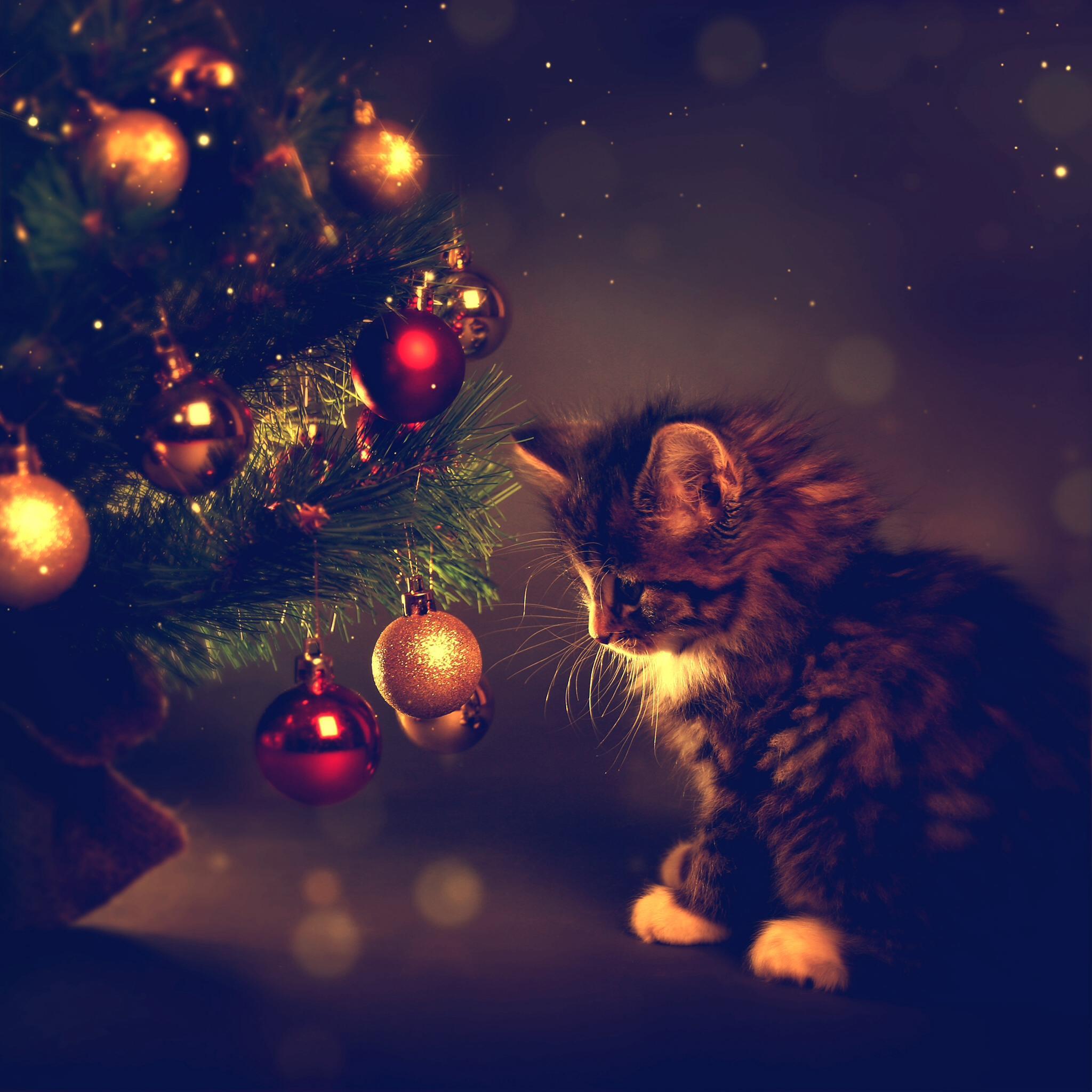 обои новогодняя ёлка, игрушки, котёнок, животное картинки фото