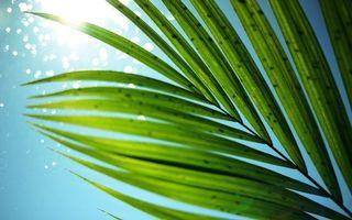 Фото бесплатно ветка, пальмы, небо