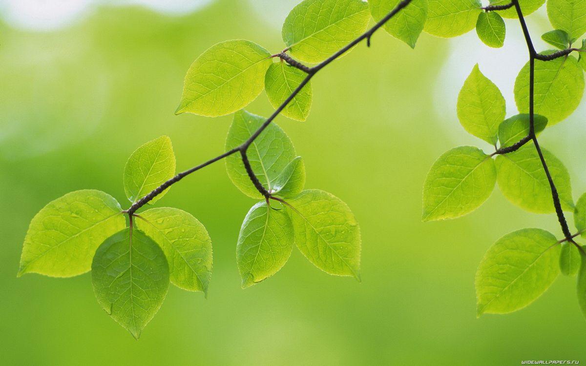 Фото бесплатно ветви, листья, зеленые, прожилки, макро