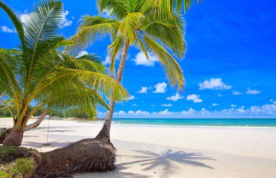 Заставки море, берег, пальмы
