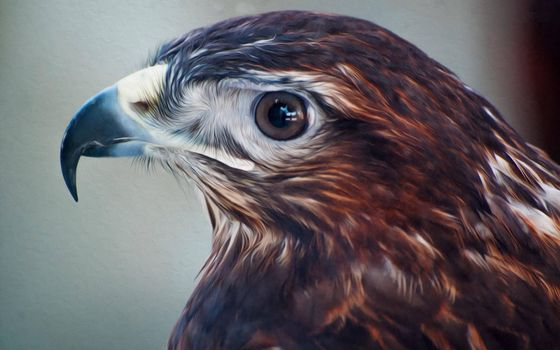 Photo free falcon, beak, eye
