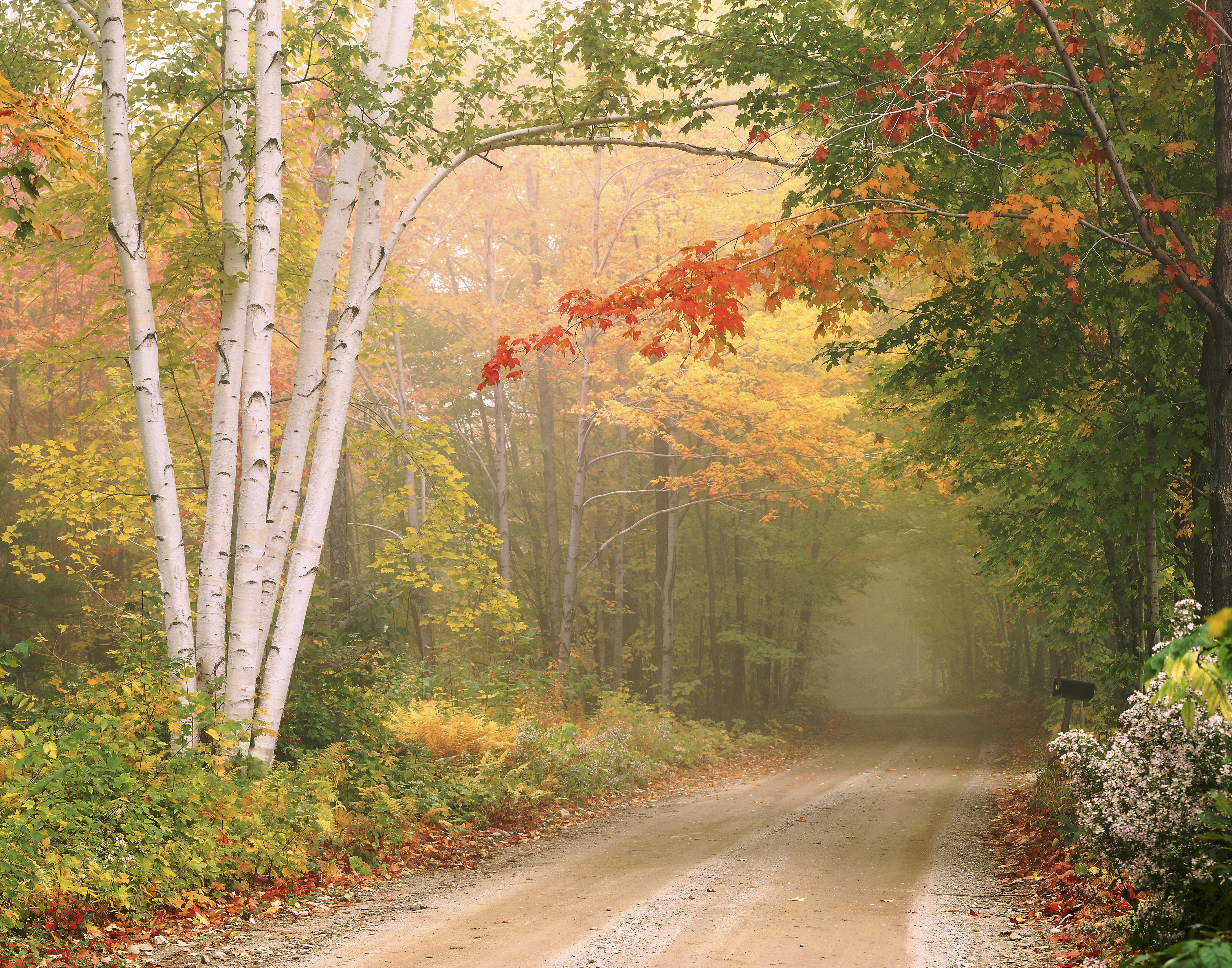 осень, дорога, деревья