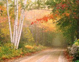 Обои осень, дорога, деревья, лес, туман, природа, Underhill, Vermont, New England, пейзаж