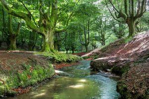 Бесплатные фото Otzarreta,Bizkaia,Spain,лес,деревья,речка,пейзаж