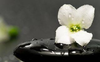Бесплатные фото цветок,лепестки,белые,камень,черный,капли,вода