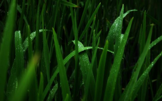 Фото бесплатно капли росы, трава, зелень