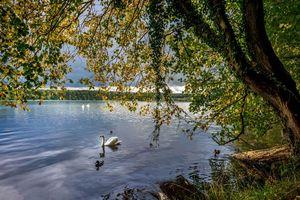 Бесплатные фото осень,река,деревья,лебеди,пейзаж