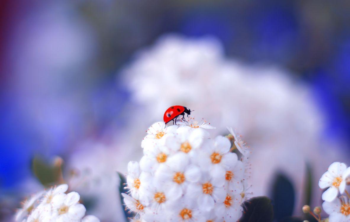 Фото бесплатно божья коровка, насекомые, растение, макро, насекомые