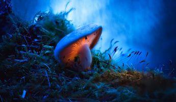 Фото бесплатно гриб, мох, макро