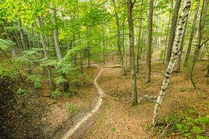 Бесплатные фото лес,деревья,осень,тропинка,природа