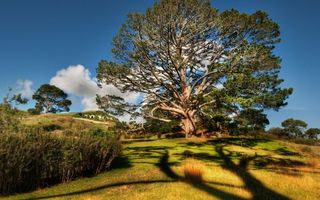 Бесплатные фото деревья,крона,кустарник,трава,тень,небо,облака