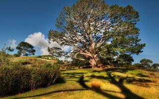 Фото бесплатно деревья, крона, кустарник