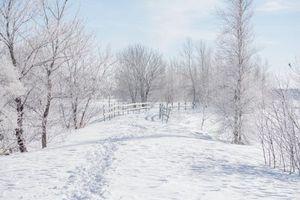 Бесплатные фото зима,снег,деревья,тропинка,пейзаж