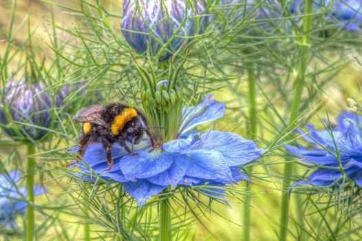 Photo free flowers, bumblebee, close-up